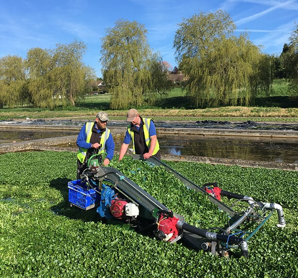 collecting-watercress